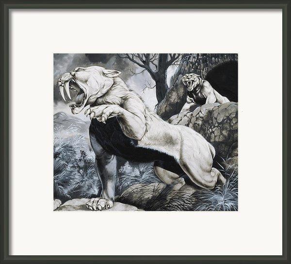 Sabre-toothed Tigers Framed Print By Richard Hook