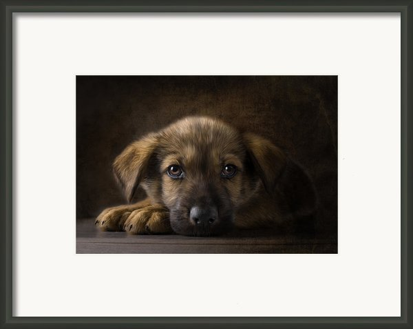 Sad Puppy Framed Print By Bob Nolin