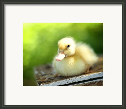 Sally Framed Print By Amy Tyler