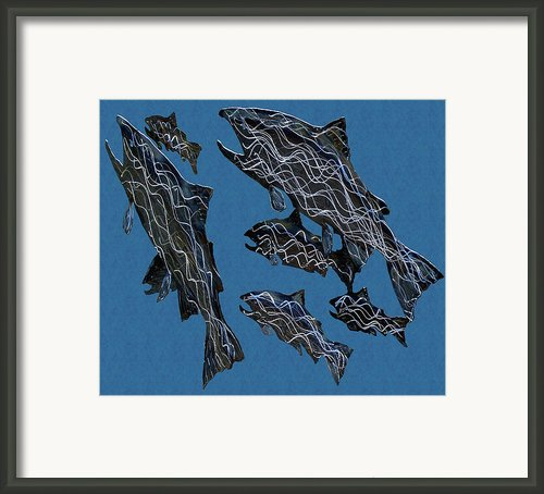 Salmonrun Framed Print By Robert Trauth
