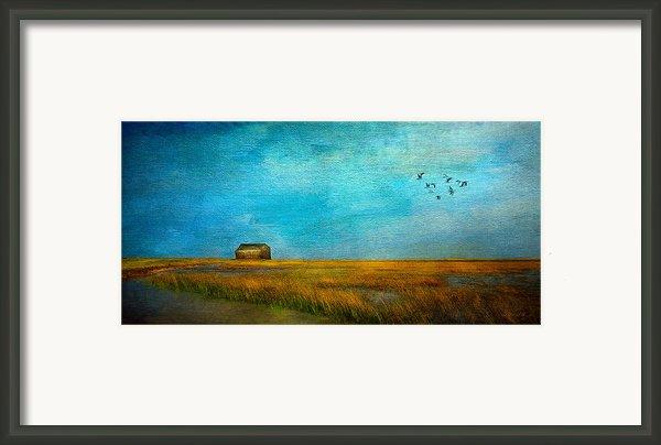 Salt Marsh Framed Print By Michael Petrizzo