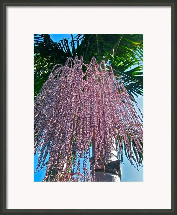 San Clemente Sunday Framed Print By Gwyn Newcombe