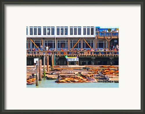 San Francisco Pier 39 Sea Lions . 7d14272 Framed Print By Wingsdomain Art And Photography