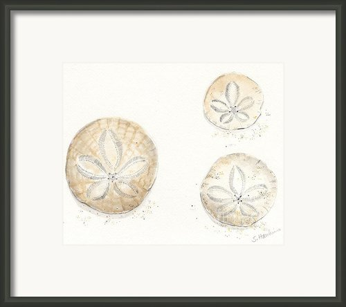 Sand Dollar Trio Watercolor Framed Print By Sheryl Heatherly Hawkins