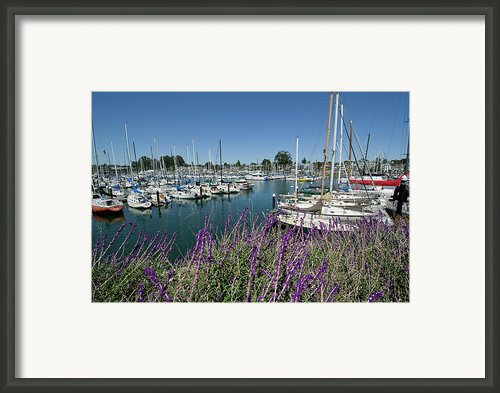 Santa Cruz Harbor - California Framed Print By Brendan Reals