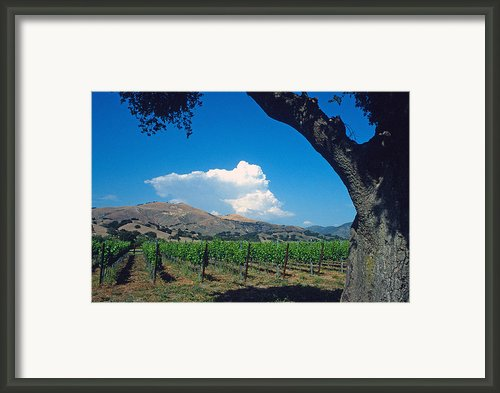 Santa Ynez Vineyard View Framed Print By Kathy Yates