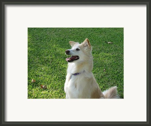 Sarah Smile Framed Print By Shawn Hughes