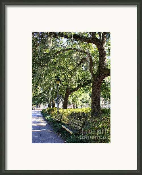 Savannah Benches Framed Print By Carol Groenen