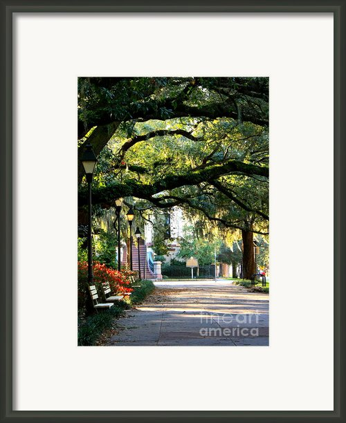 Savannah Park Sidewalk Framed Print By Carol Groenen