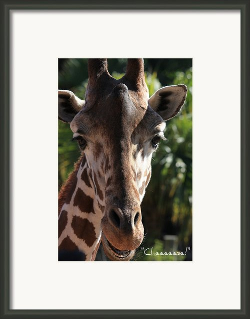 Say Cheese Card Framed Print By Carol Groenen