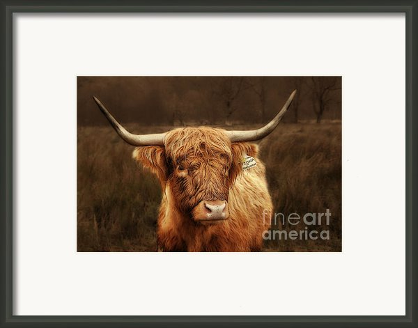 Scottish Moo Coo - Scottish Highland Cattle Framed Print By Christine Till