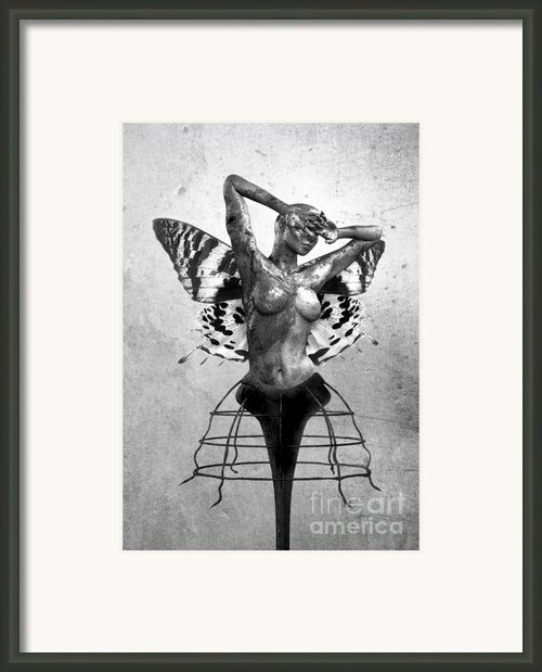 Scream Of A Butterfly Ii Framed Print By Photodream Art