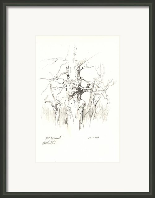 Scrub Oaks In Cottonwood Framed Print By John Norman Stewart
