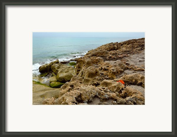 Sea Grape Framed Print By Michelle Wiarda
