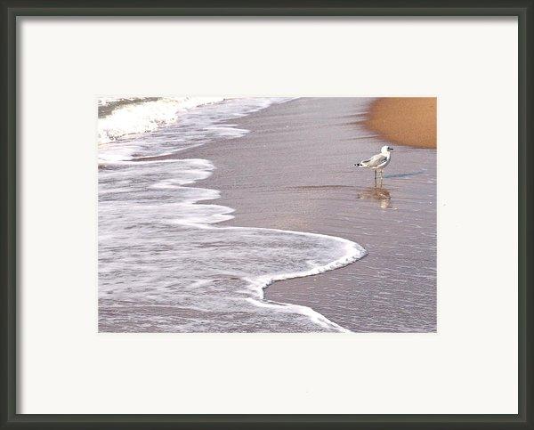 Sea Gull Reflection Framed Print By Cindy Lee Longhini