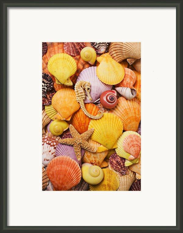 Sea Horse Starfish And Seashells  Framed Print By Garry Gay