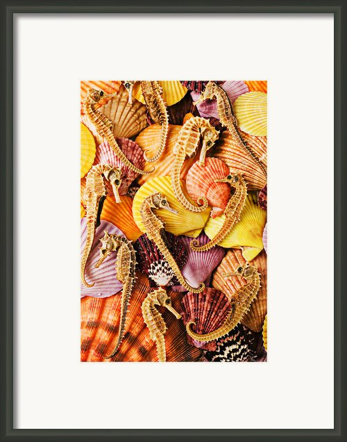 Sea Horses And Sea Shells Framed Print By Garry Gay