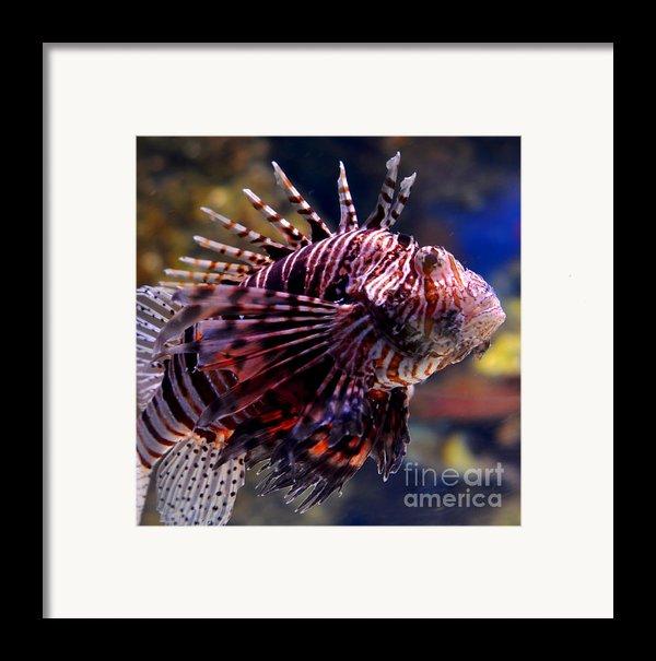 Sea Lion Framed Print By Pravine Chester