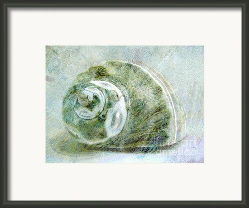 Sea Shell I Framed Print By Ann Powell