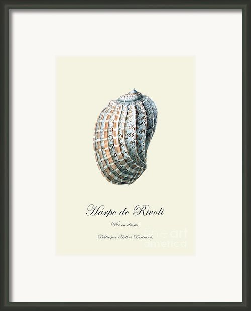 Sea Shell Framed Print By Patruschka Hetterschij