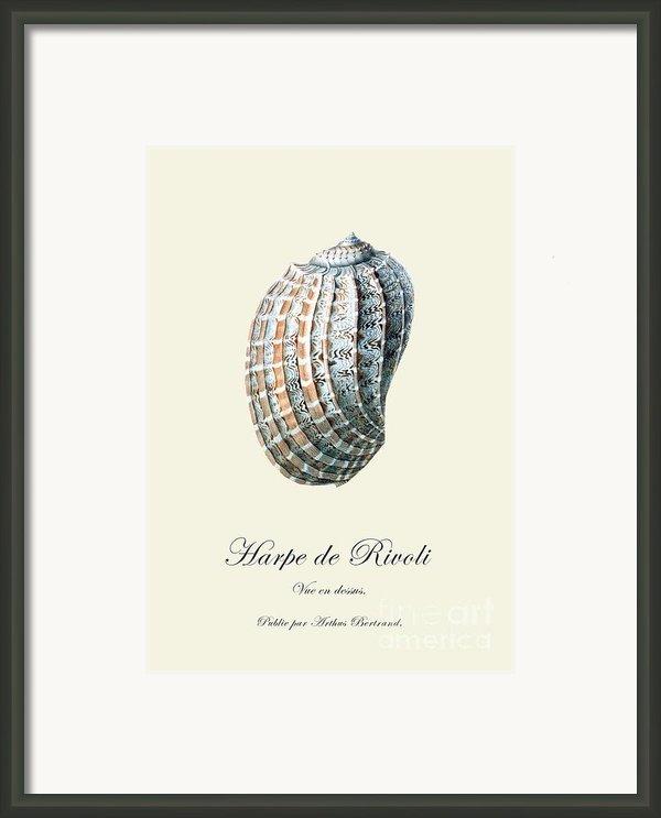 Sea Shell Framed Print By Patruschka Hetterschij