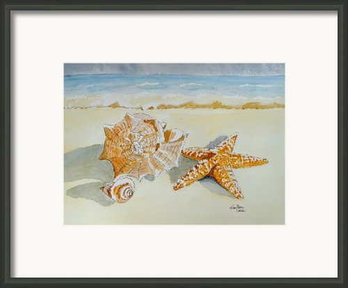 Sea Shells Framed Print By Eva Ason