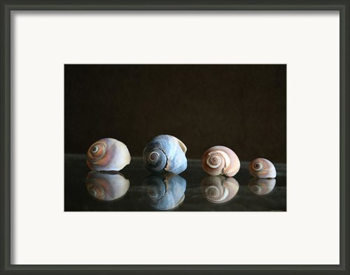 Sea Snails Framed Print By Linda Sannuti