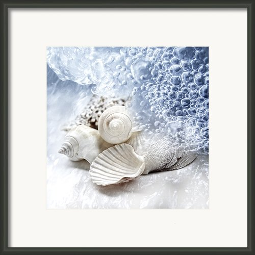 Sea Snails Framed Print By Maika 777