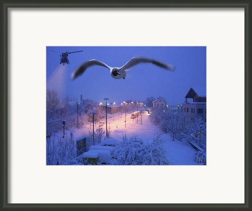 Seagull At Winter Framed Print By Nafets Nuarb