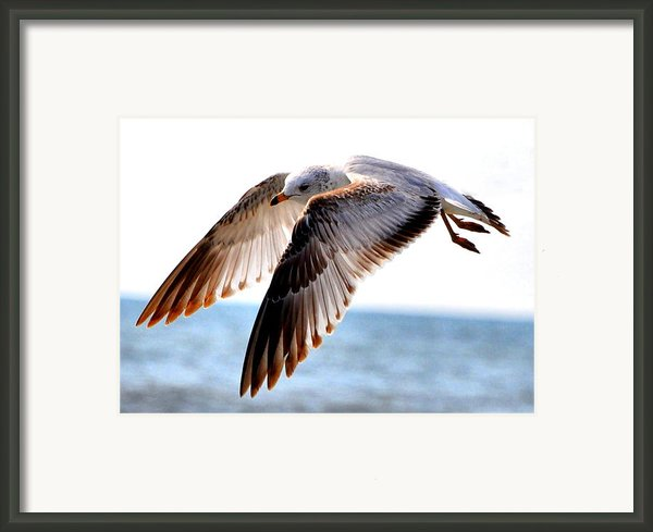 Seagull Cruise Framed Print By Emily Stauring