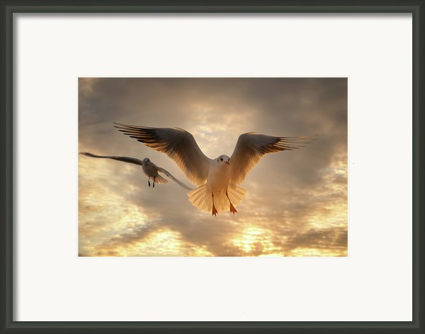 Seagull Framed Print By Gilg Photographie