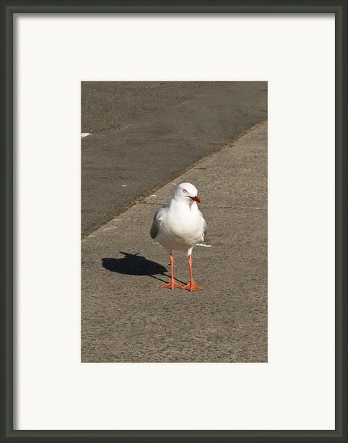 Seagull In The Summer Sun Framed Print By Ulrich Schade