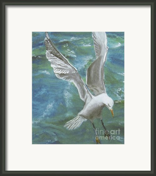 Seagull Framed Print By Jim Barber Hove