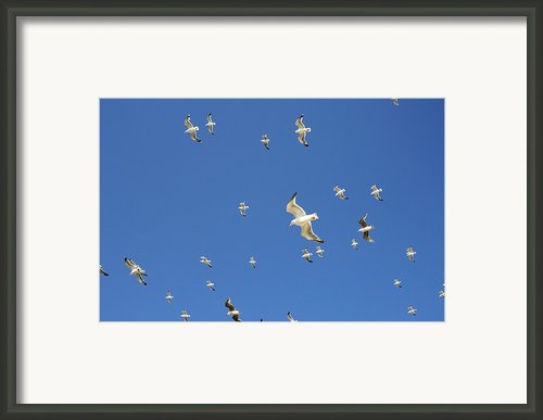 Seagull Framed Print By Johnny Greig