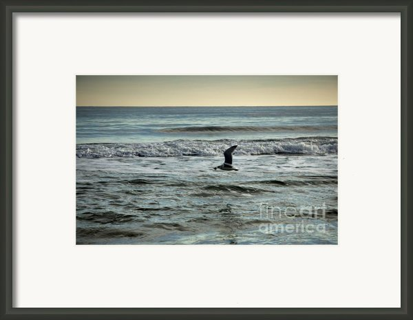 Seagull With Starfish  Framed Print By Rosemary Hawkins
