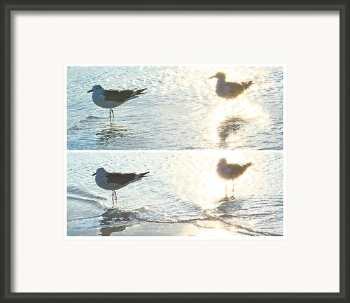 Seagulls In A Shimmer Two Views By Olivia Novak Framed Print By Olivia Novak