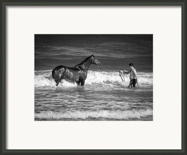 Seahorse  Framed Print By Michael Avory