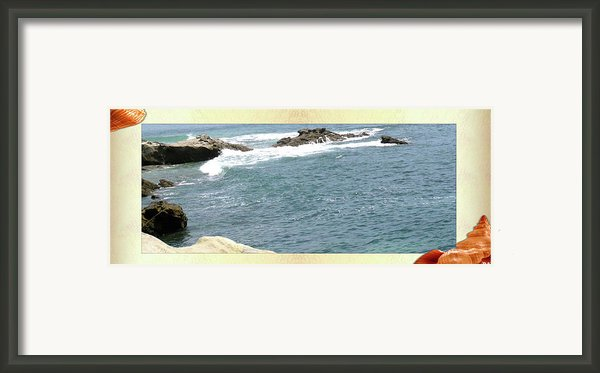 Seashell By The Seashore Framed Print By Debra     Vatalaro