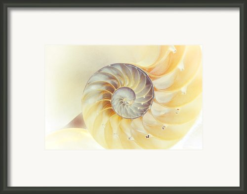 Seashell. Light Version Framed Print By Jenny Rainbow