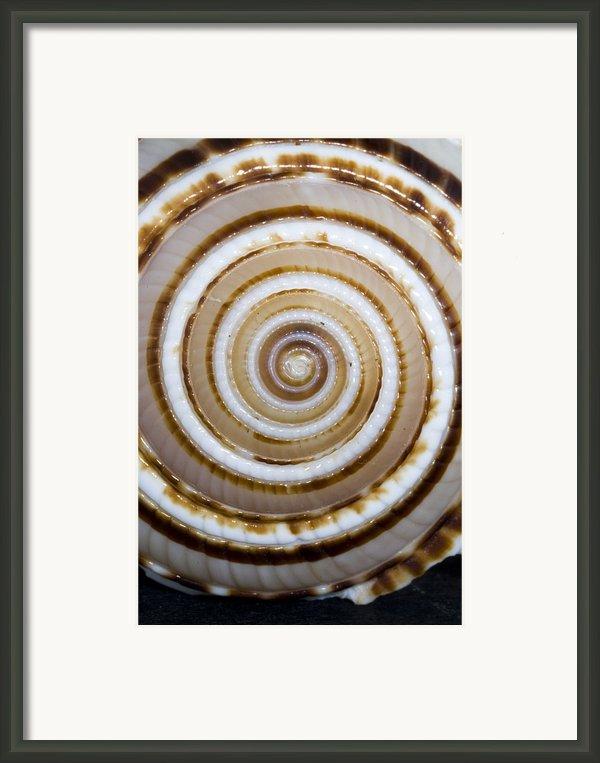 Seashell Spirals Framed Print By Bill Brennan - Printscapes