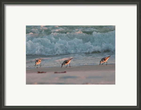 Seaside Trio Framed Print By Charles Warren