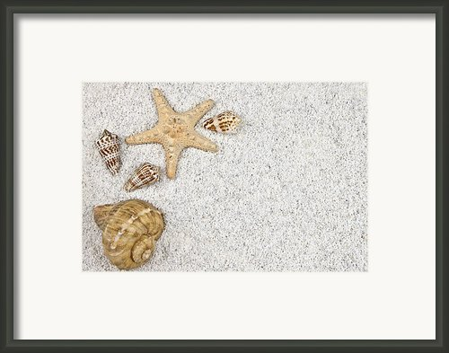 Seastar And Shells Framed Print By Joana Kruse