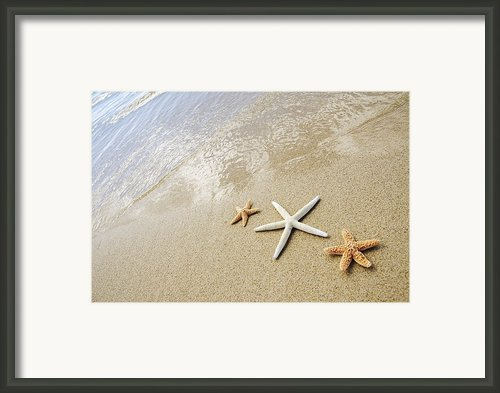 Seastars On Beach Framed Print By Mary Van De Ven - Printscapes