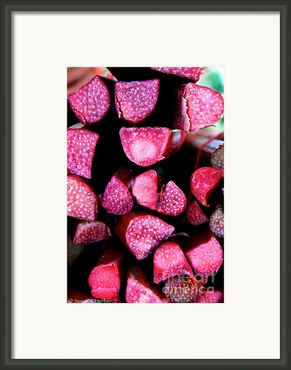 Seeking Pie Crust Framed Print By Susan Herber