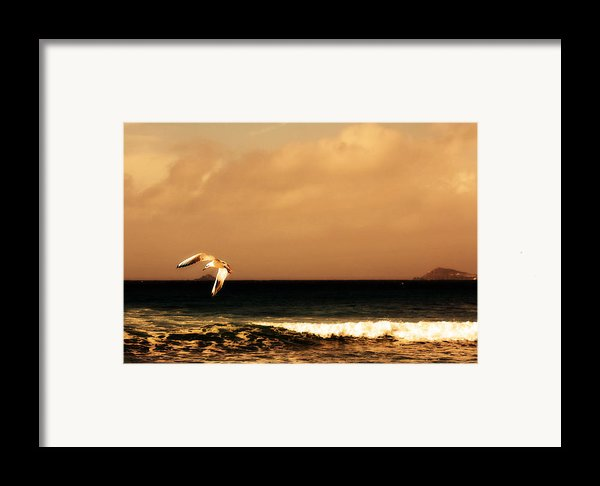 Sennen Seagull Framed Print By Linsey Williams