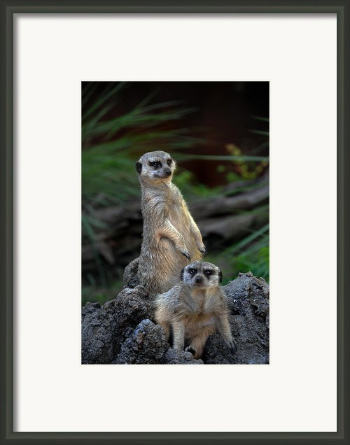 Sentry Framed Print By Skip Willits