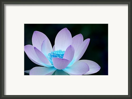 Serene Framed Print By Photodream Art