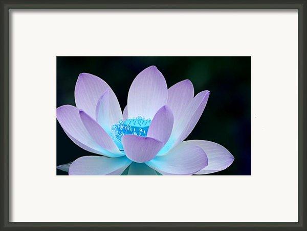 Serene Framed Print By Photodream Art
