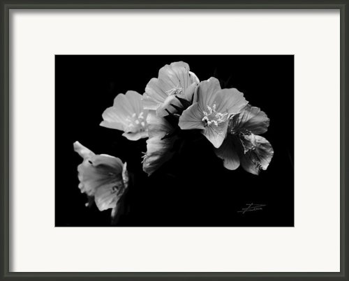 Serenity Framed Print By Barbara  White