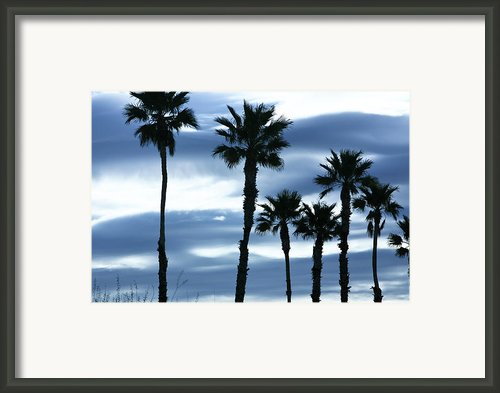 Seven Palms Framed Print By Gilbert Artiaga
